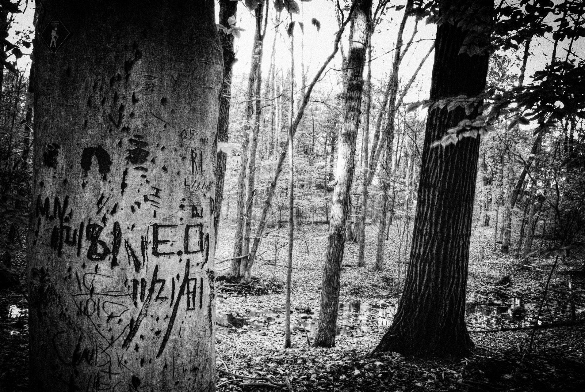 """E.O. 11/21/81, American Beech Tree"", Griggstown Grasslands, 2007"