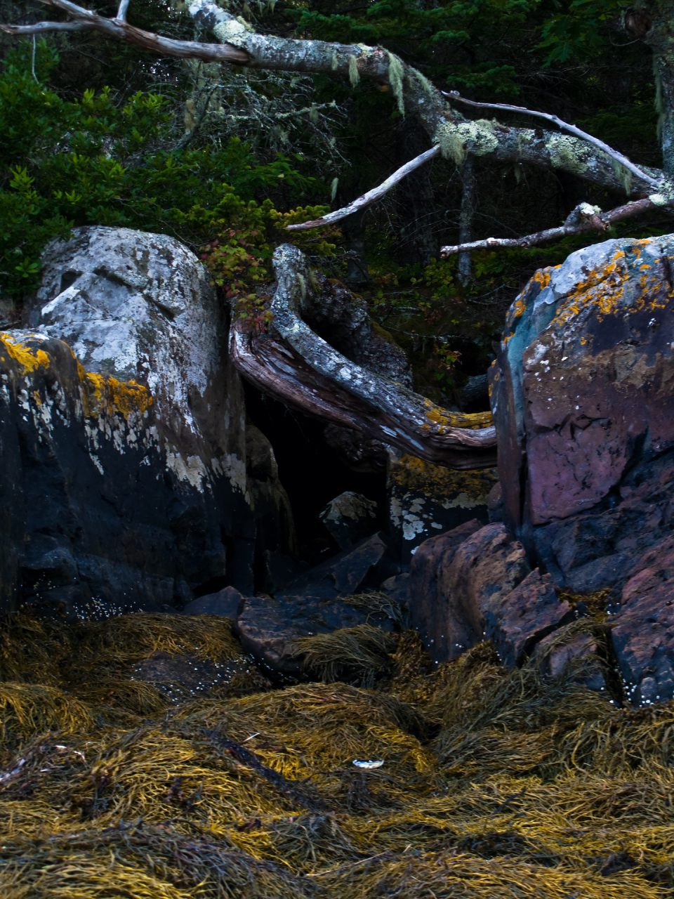 """Symbiosis"", Island of Vinalhaven, 2009"